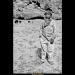 Young Shepherd thumbnail